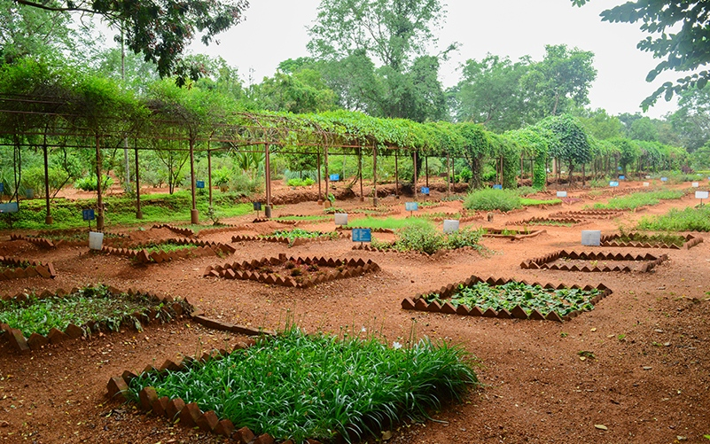 Permaculture in The Art of Living International Center